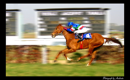 How to understand Speed Rating | Free Horse Racing Tips and