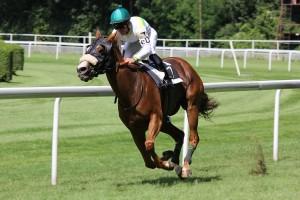 horseracingimage123