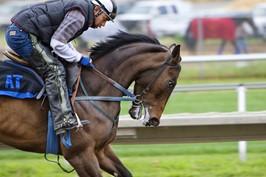 horse123